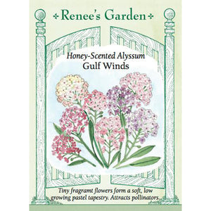 Alyssum - Honey Scented Gulf Winds