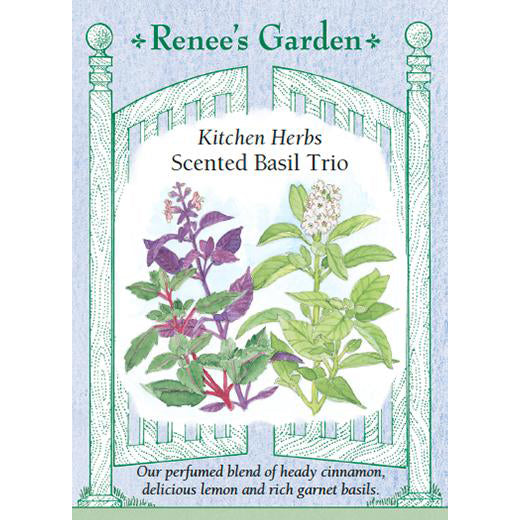 Basil - Scented Trio Kitchen Herbs