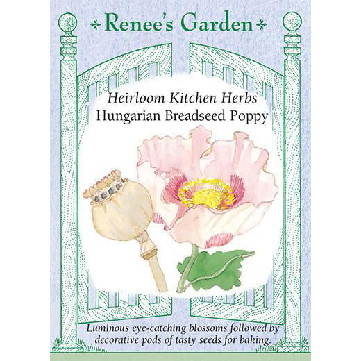 Poppies - Hungarian Breadseed Heirloom Kitchen Herb