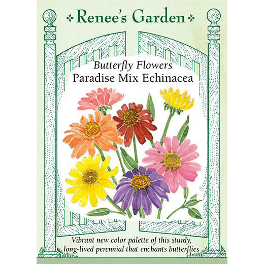 Echinacea - Butterfly Flowers Paradise Mix