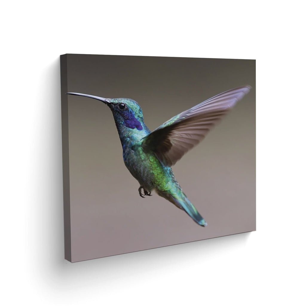 Canvas Colibrí