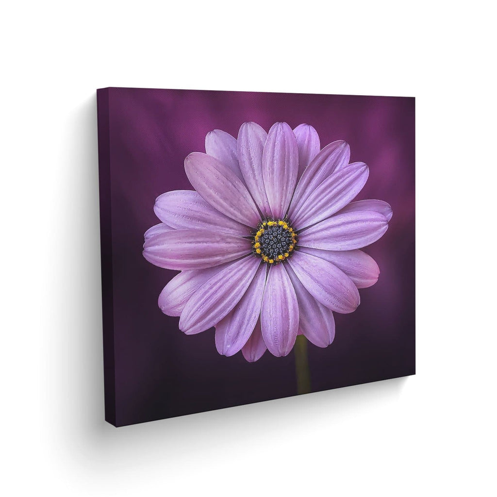 Cuadro Canvas Gerbera decorativa
