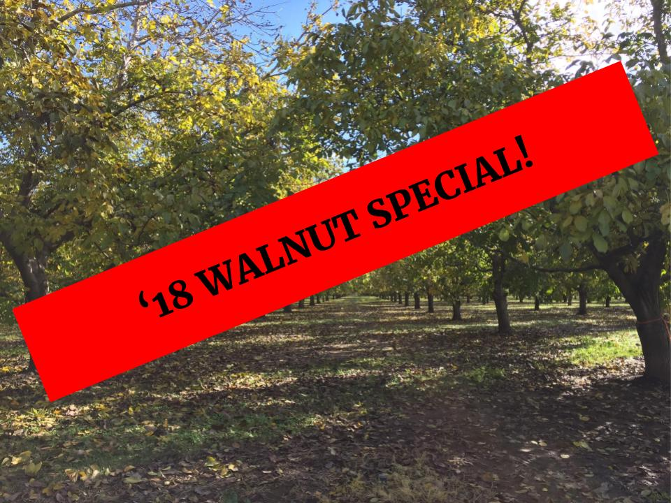 SALE '18 Premium Chandler Walnuts