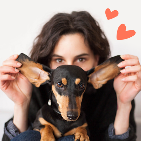 10 things only dachshund owners understand