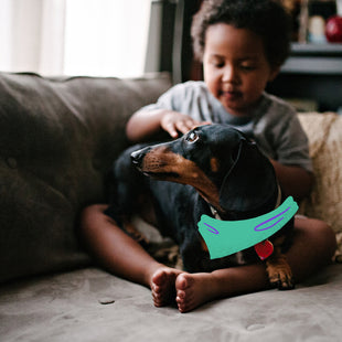 How to prepare your dachshund for your new baby