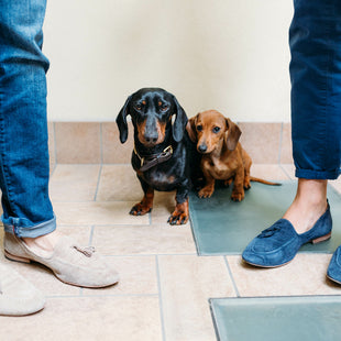 5 tips for potty training your dachshund