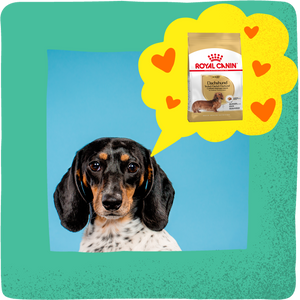 Adult Dachshund Food