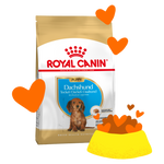 Puppy Dachshund Food