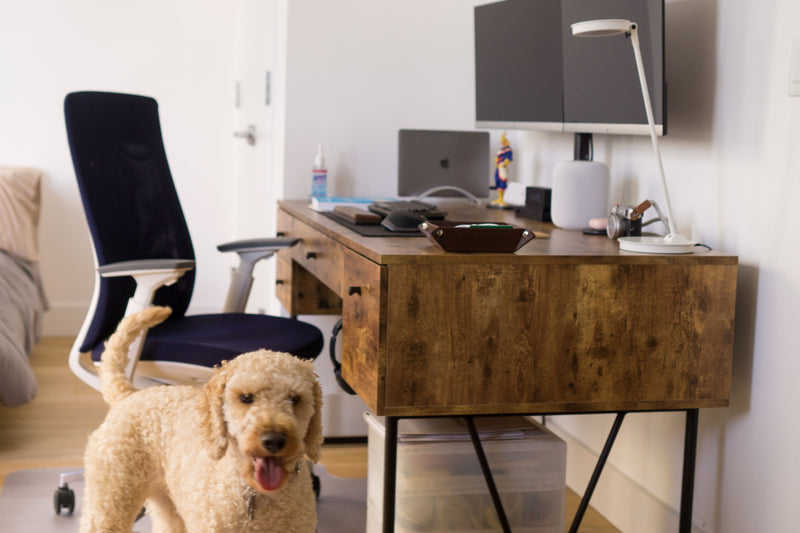 corner nook - home office furniture - elevate task chair - goldendoodle dog - @calvinandhub