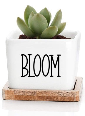 Small Square Plant Pot - Bloom