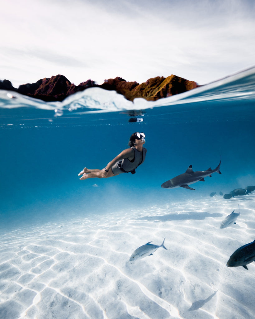 swimming with sharks protecting ocean corals