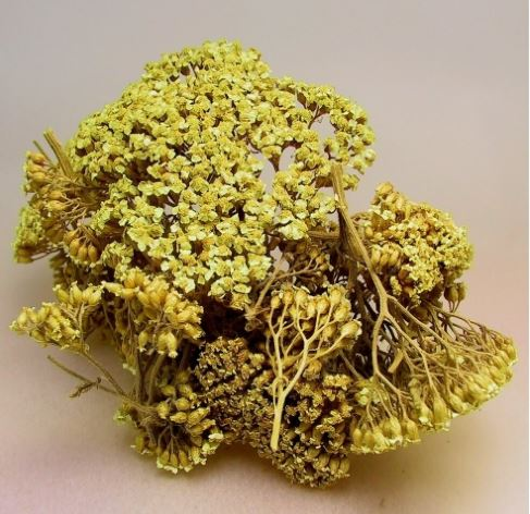 Yarrow flower (Achillea millefolium) Dried Herb