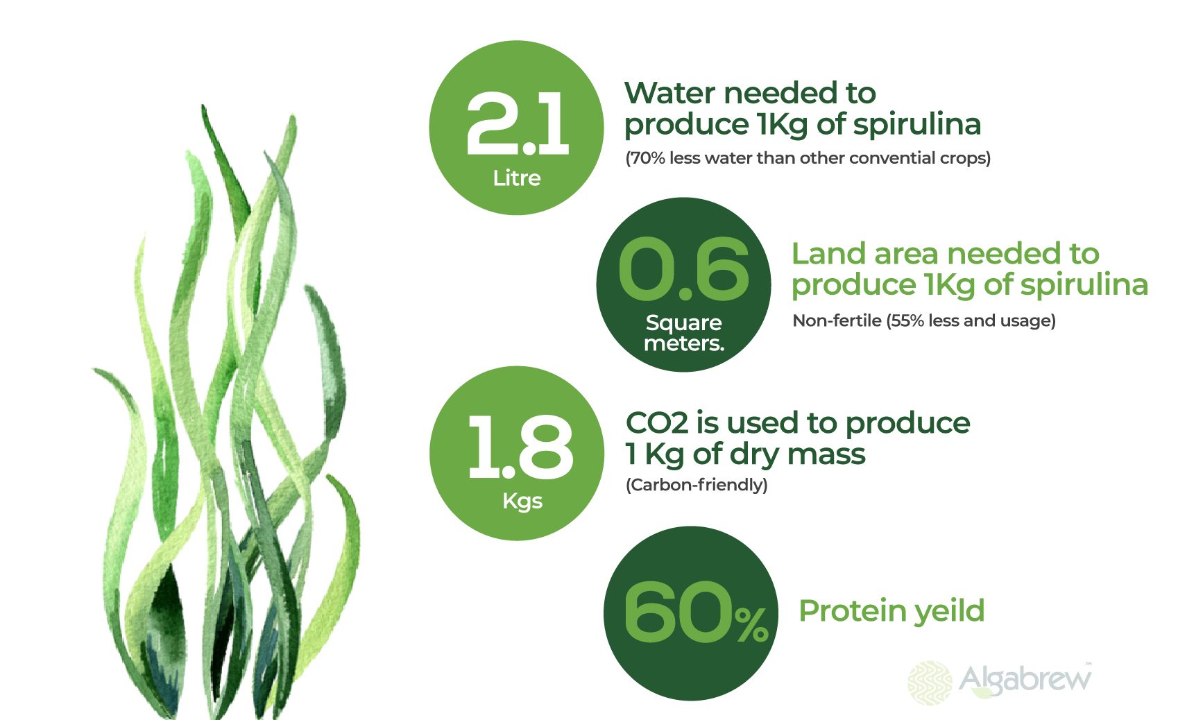Spirulina Sustainability