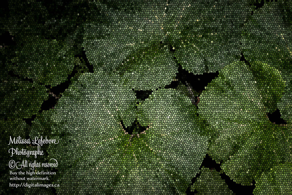 Pack de 6 Texture  de  feuillages Petasites hybridus - Digital Images Download