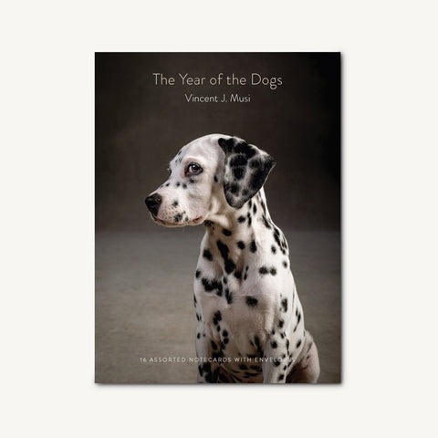 The Year of the Dogs Notecards | Notecard Assortment Box