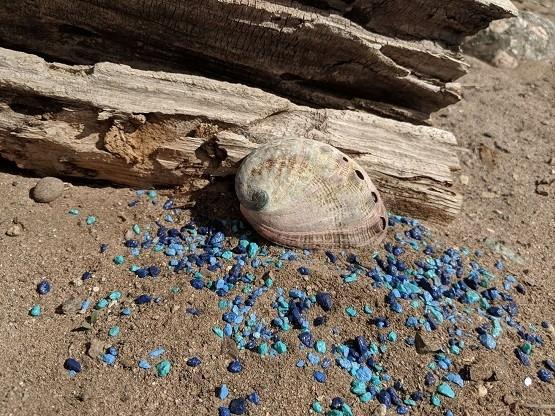 Gaia's Mermaid Shells (Domestic Shipping) - Gaia's Whole Healing Essentials