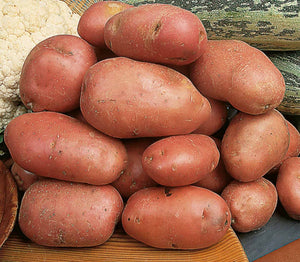Desiree Seed Potatoes - 2kg - Maincrop
