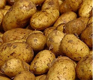 Maris Piper Seed Potatoes - 2kg - Maincrop