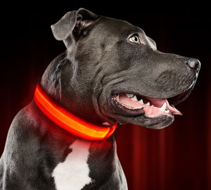 Safety LED Dog Collar – USB Rechargeable with Water Resistant Flashing Light - New BOGO Deal going on now- Add any 2 to your cart and the discount is automatically applied!!!!!