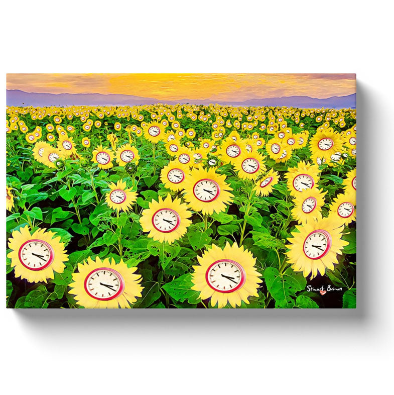 a field of clock sunflowers