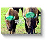 american bison art two bison double trouble canvas print