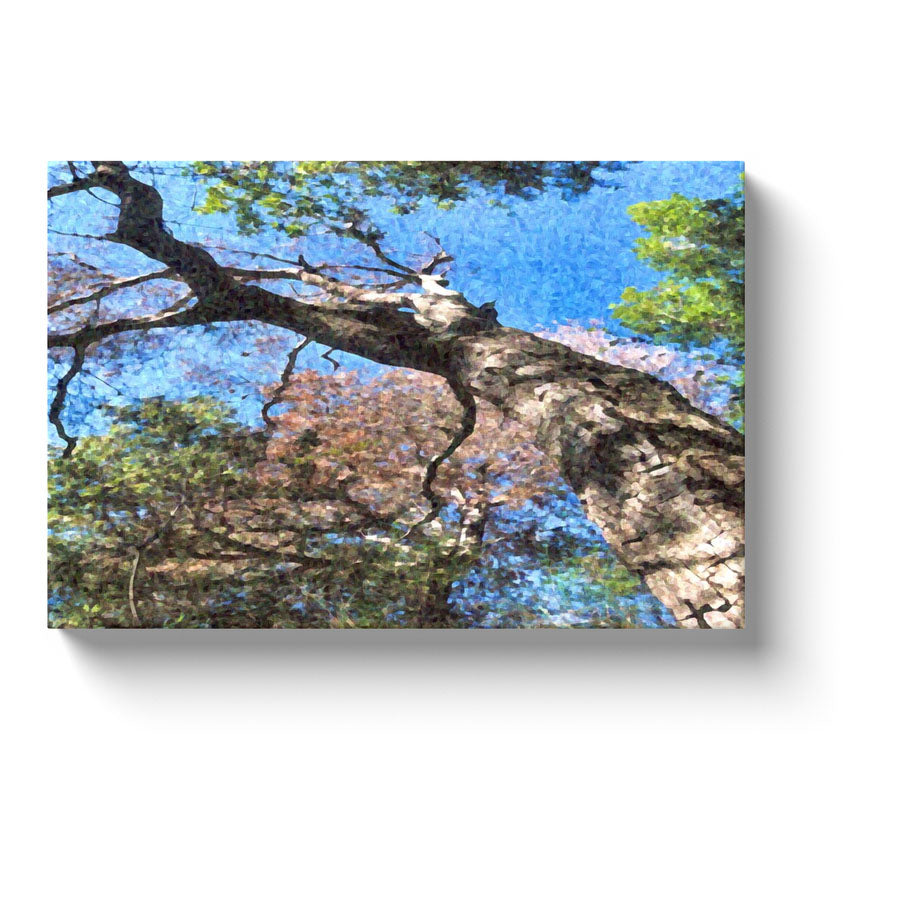 tree trunk and sky art lopsided tree reaching for the sky canvas print