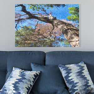 tree trunk and sky art