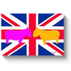 two pink and orange westies almost touching noses on a british flag