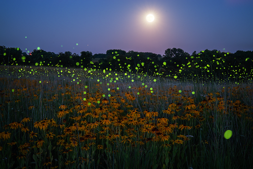 Full Moon and Flowers