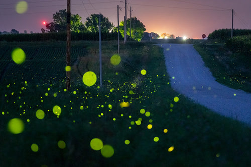 Fireflies and Farm Road