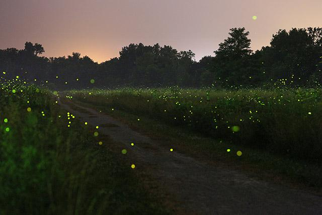 Firefly Meadow with Trail
