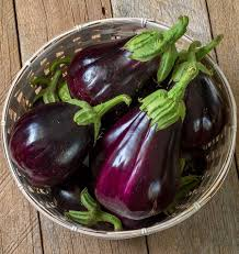 Eggplant (Black Beauty) Seedling