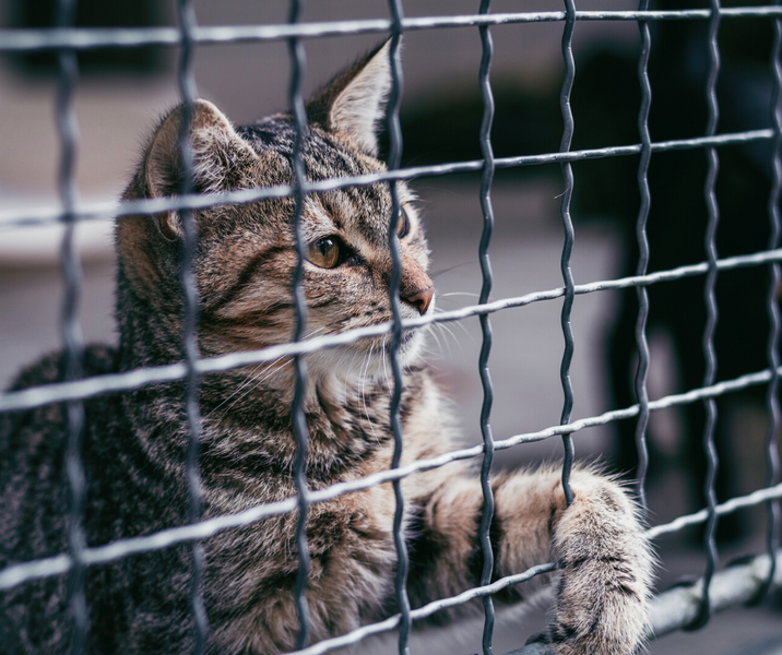 5 Ways To Help Your Local Cat Shelter