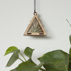 Mini Triangle Air Plant Hanger w/ air plant