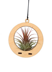 Mini Air Plant Hanger Circle w/air plant