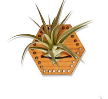 Load image into Gallery viewer, air plant magnet