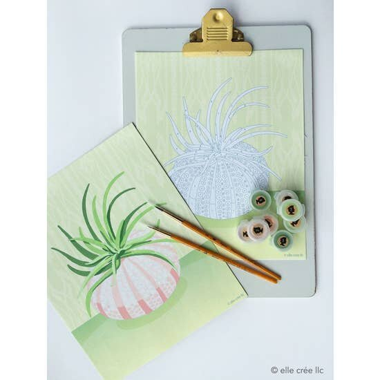 Air Plant in Sea Urchin Paint-by-Number Kit