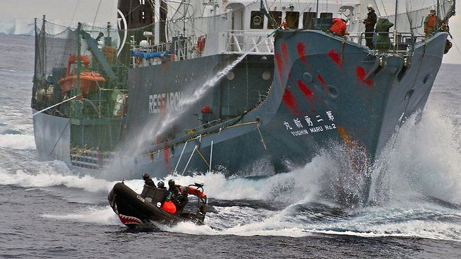 Whale Warrior RIB donated by Gowings Whale Trust in action