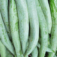 Atn Fresh Snake Gourd/Chichinge 250 Gm