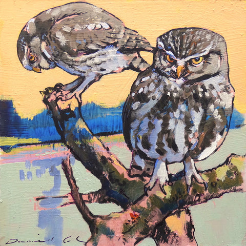 Painting of little Owls by artist Daniel Cole