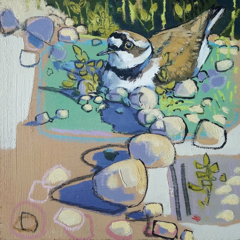 Open edition print of a Little Ringed Plover by artist Daniel Cole