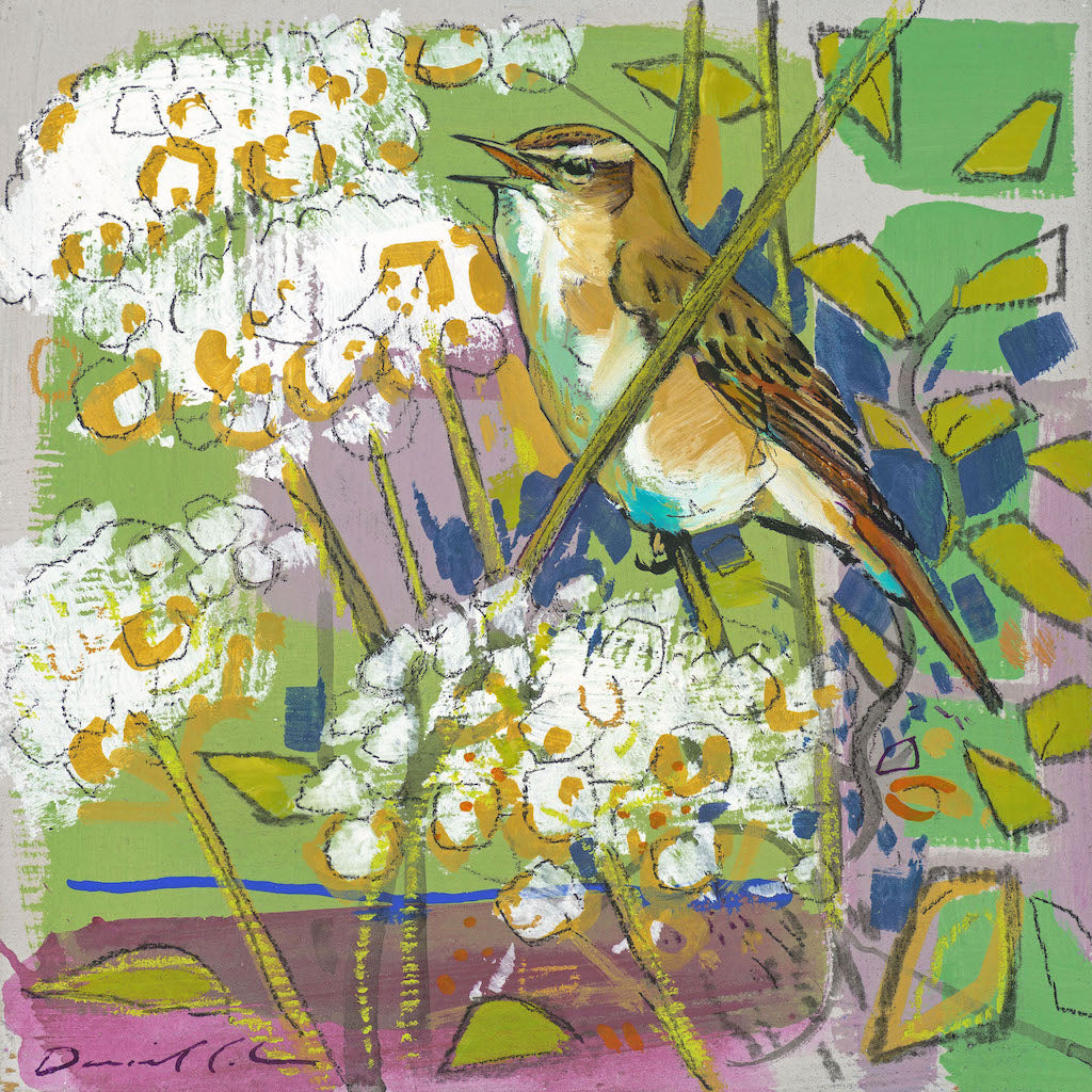 Open edition print of a Sedge Warbler by artist Daniel Cole