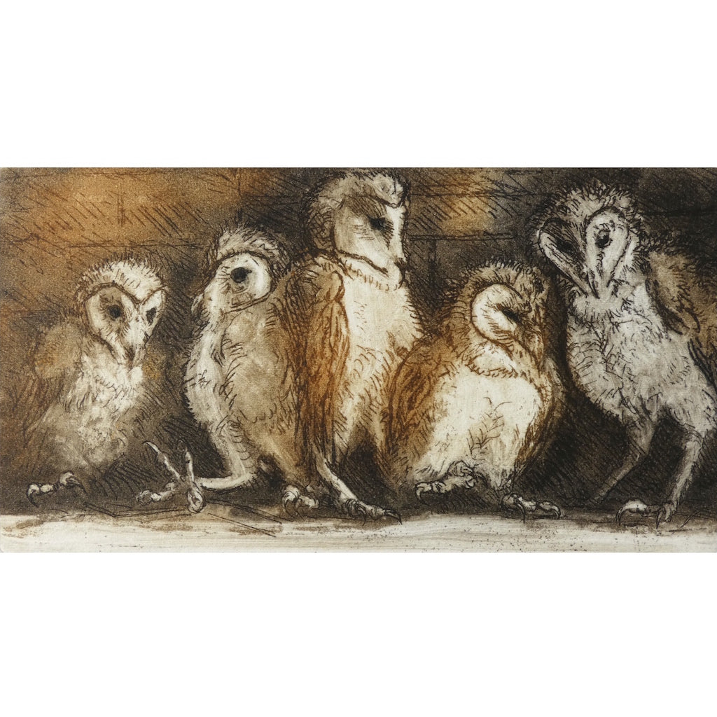 Limited edition etching of young barn owls by artist Valerie Christmas