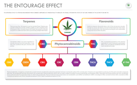 CBD and the entourage effect