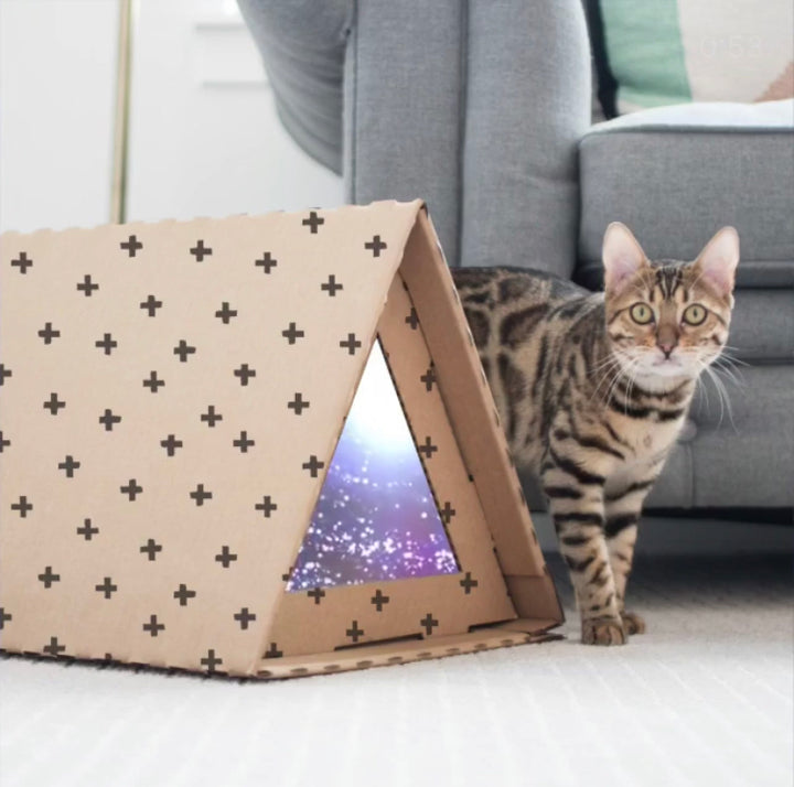 The Science Behind Why Cats Need Boxes