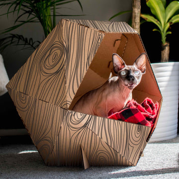 Poly Cat Home Cardboard Box Home Fun