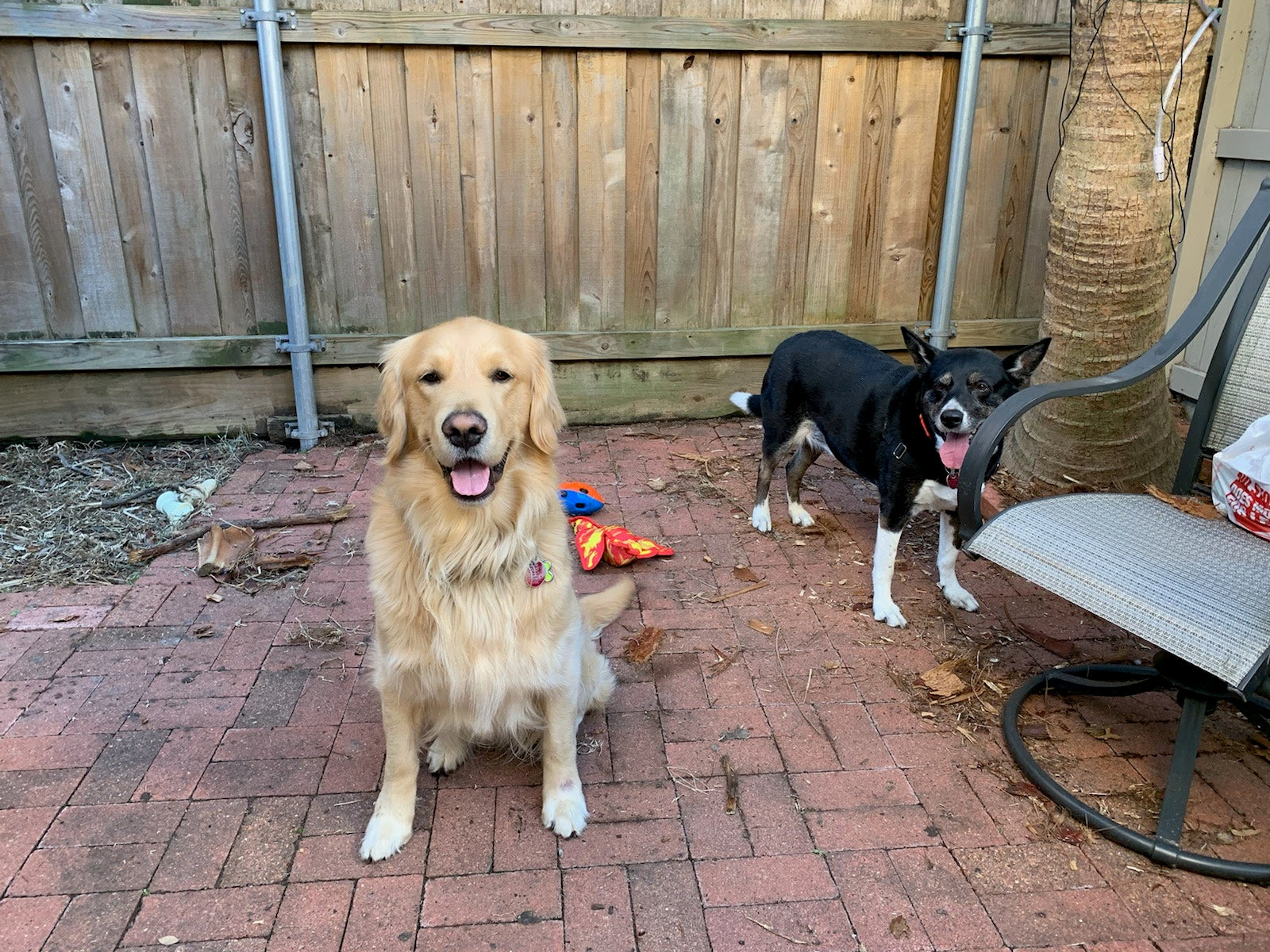 Two dogs standing on an outdoor patio
