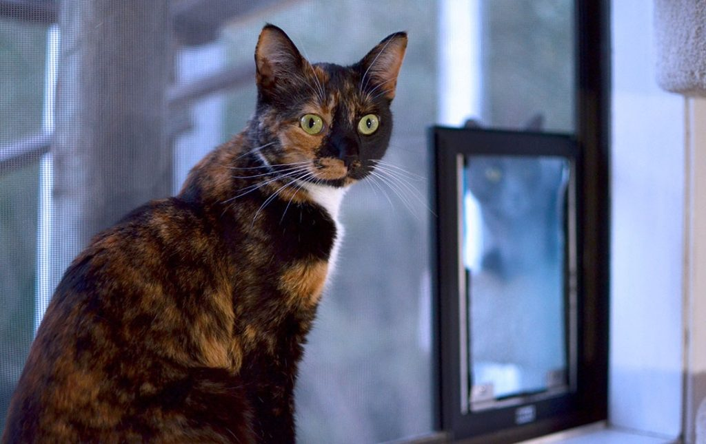 A calico cat sitting in front of a Hale Pet Door for screens