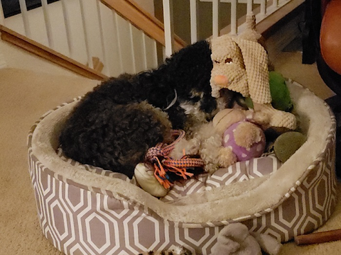 dog sleeping in the middle of toys