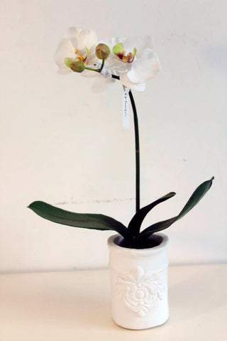 Phalaenopsis artificial